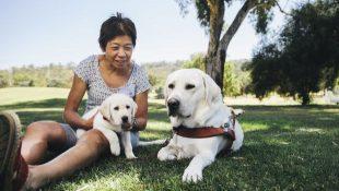 Comet meeting puppy Wanda
