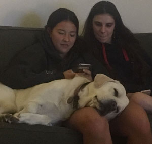 Comet in seventh heaven asleep on lounge with head on legs of family