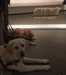 Zeke relaxing and Comet looking at the came in front of an exhibit