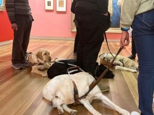 Three out of four guide dogs hard at work asleep
